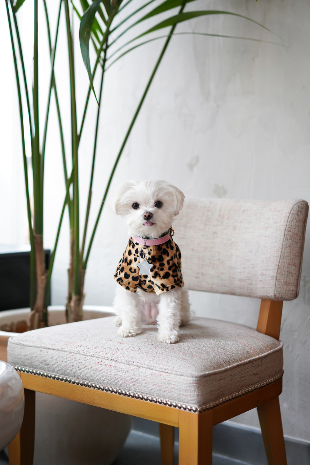Elle Drouin | Mochi Mondrian Park Ave Leopard Lounge | Freelance Wisdom