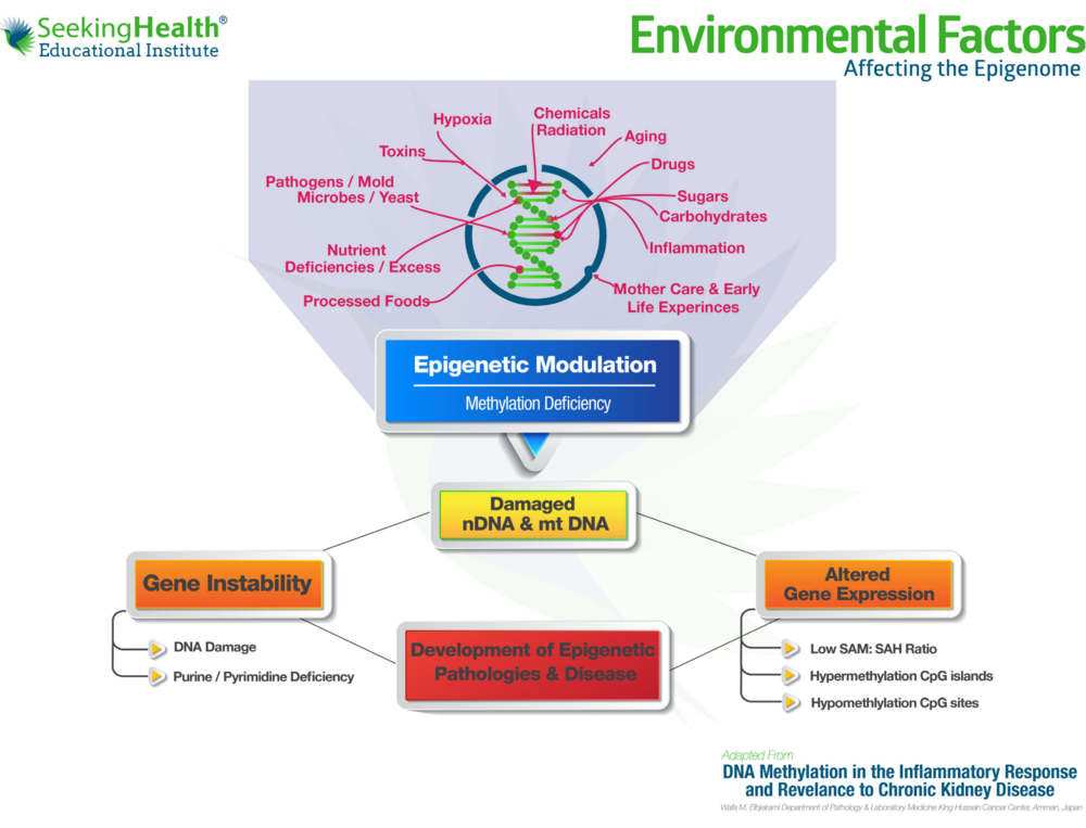 Image credit: Seeking Health Educational Institute
