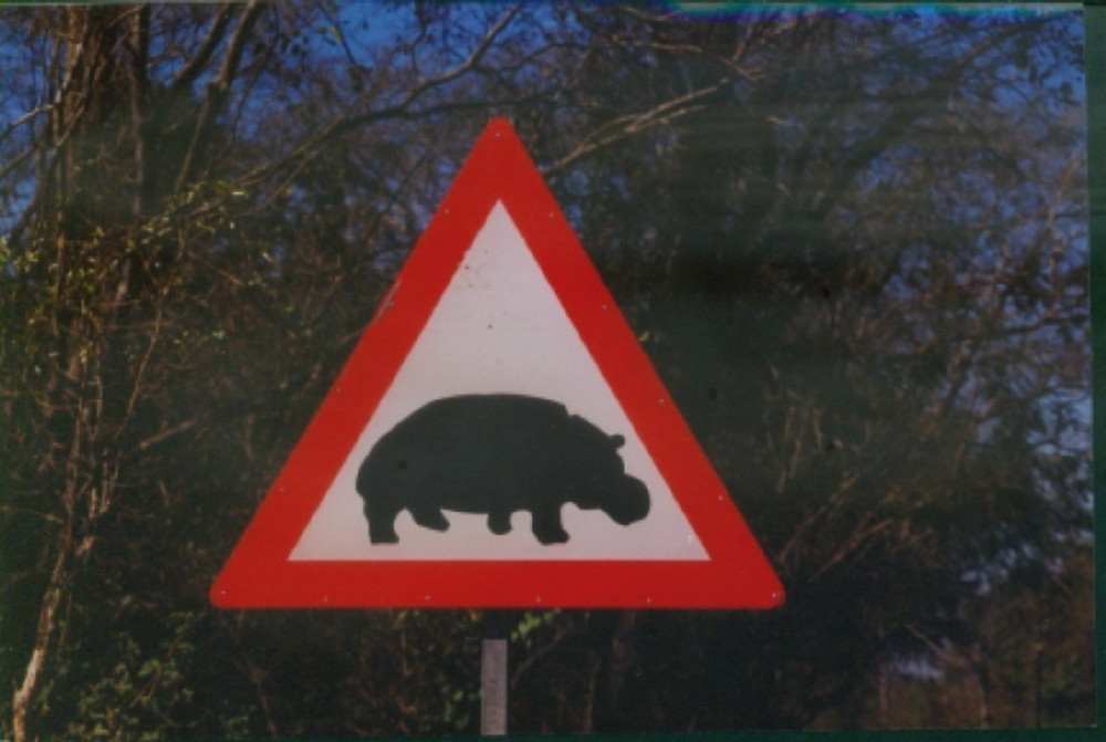 Hippo Crossing