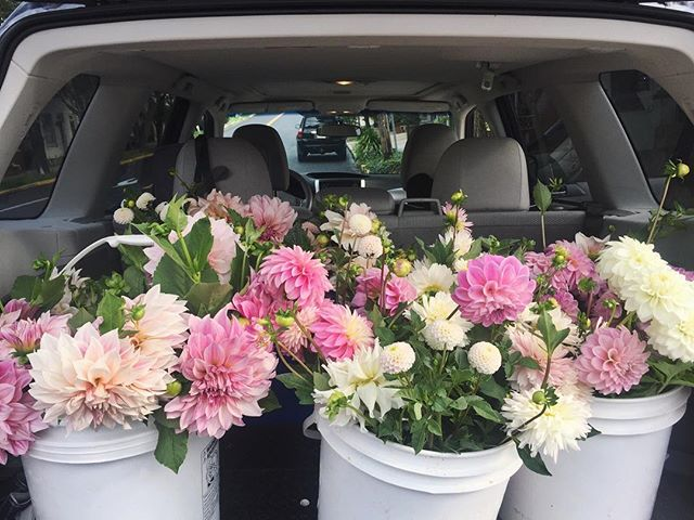 — the back of the suby never looked so happy! #farmtoflorist #dahliaparty
