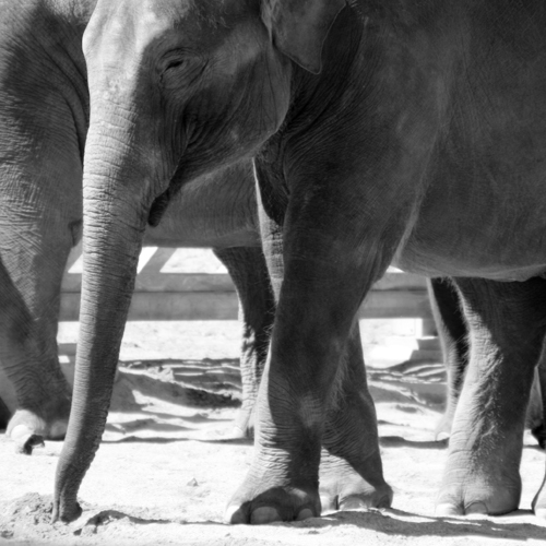 Zoo July 2007 346.jpg