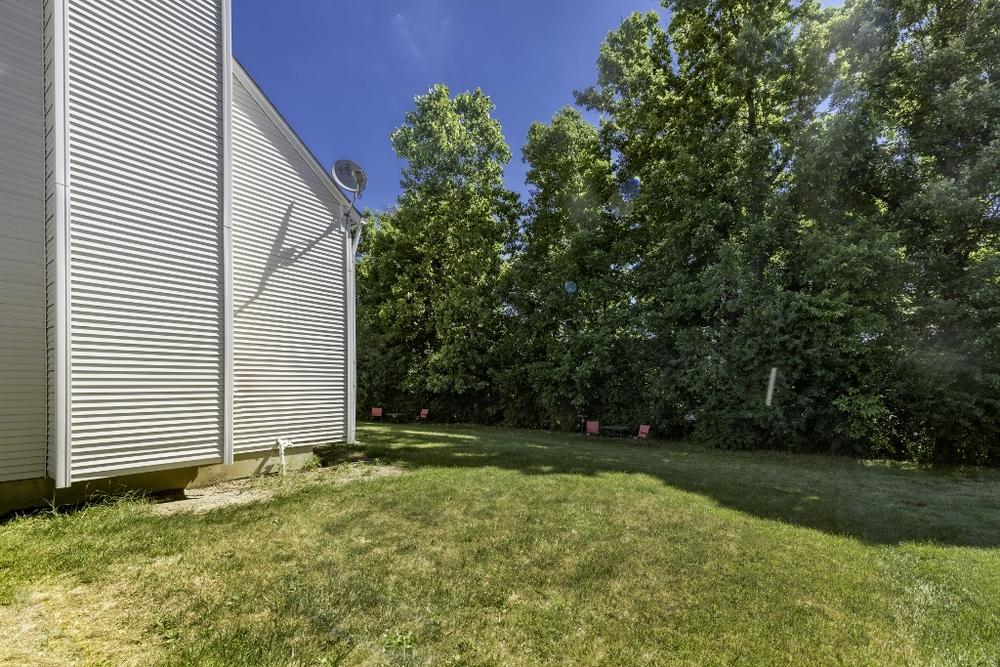 back yard 2.jpg