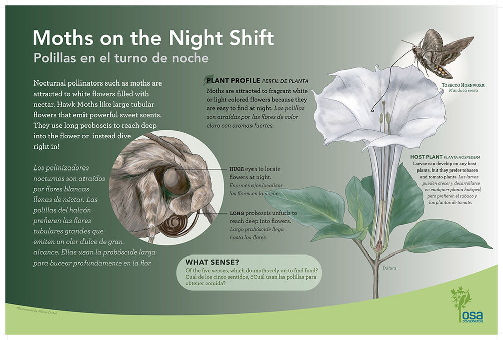 Moth Pollinator Panel. Artwork by Jillian Ditner
