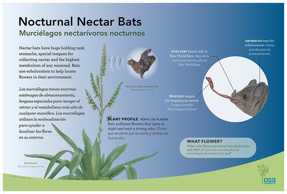 Bat Pollinator Panel, Artwork by Kristin Bell