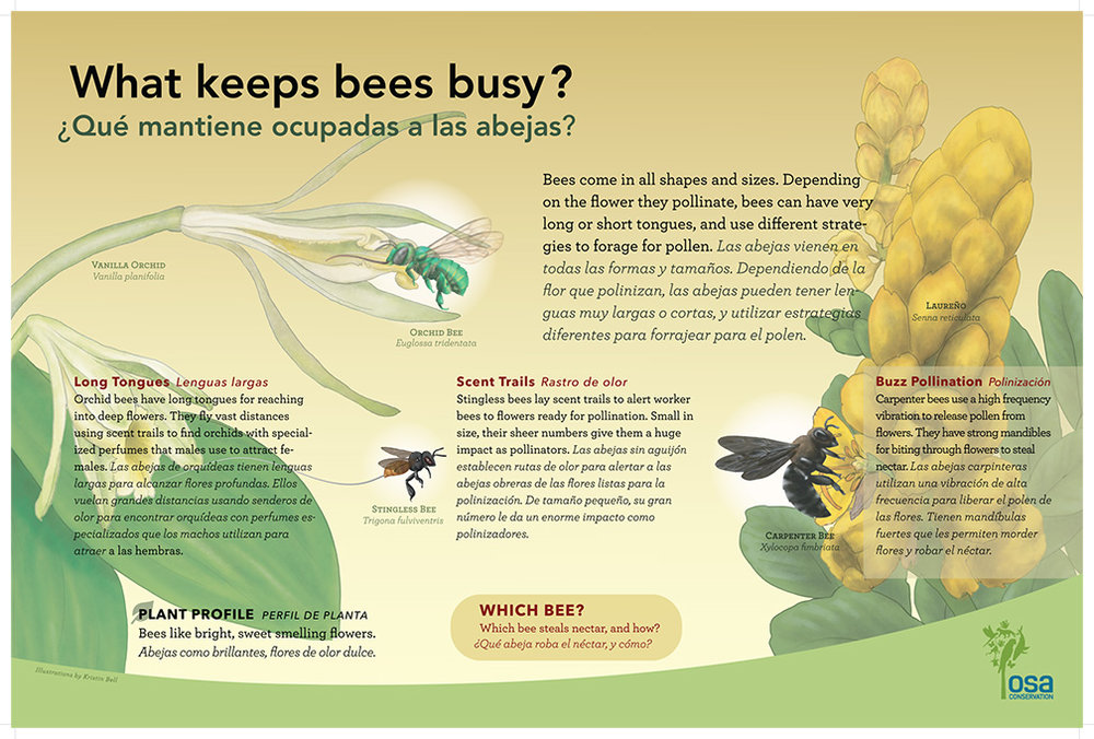 Bee Pollinator Panel, Illustrations by Kristin Bell