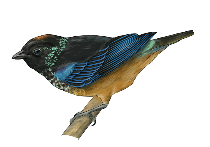 Tanager_Layout_FieldGuide.jpg