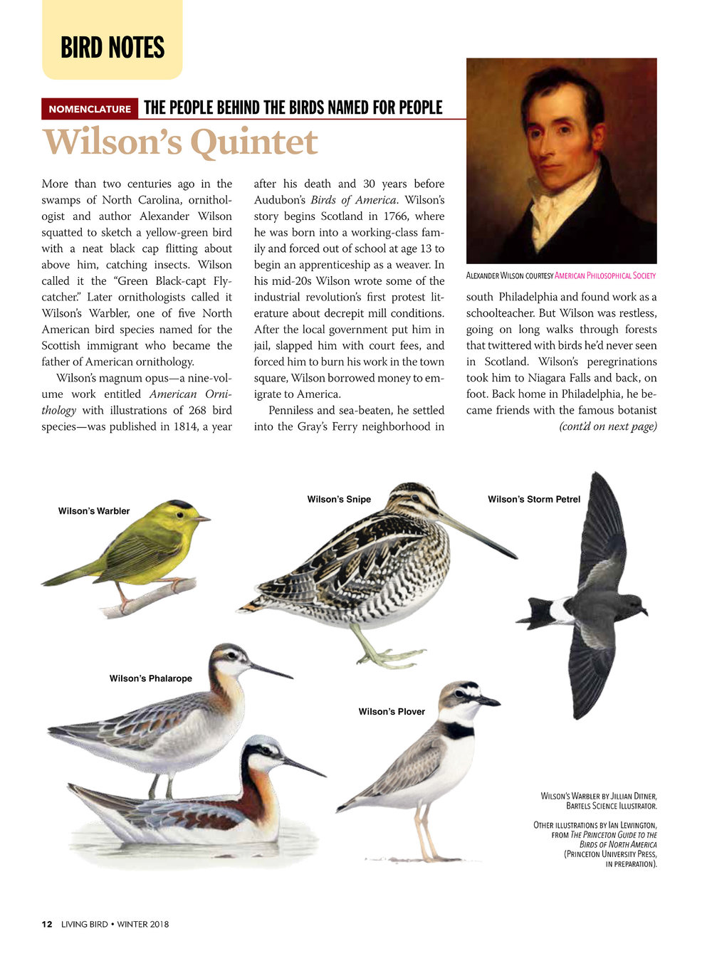 Wilson's Birds Article