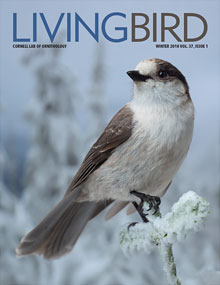 LivingBirdMagazine.jpg