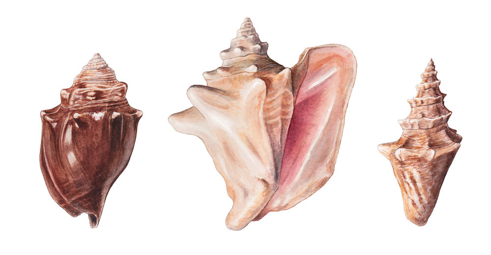 Conch Group_Final.jpg