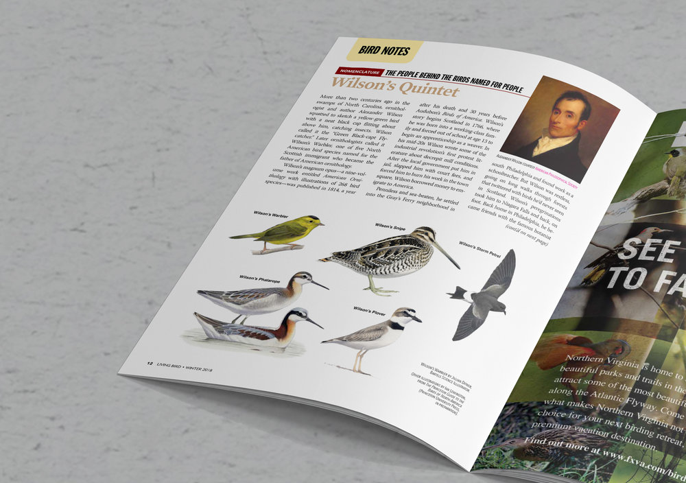 Living Bird Magazine, Winter 2017
