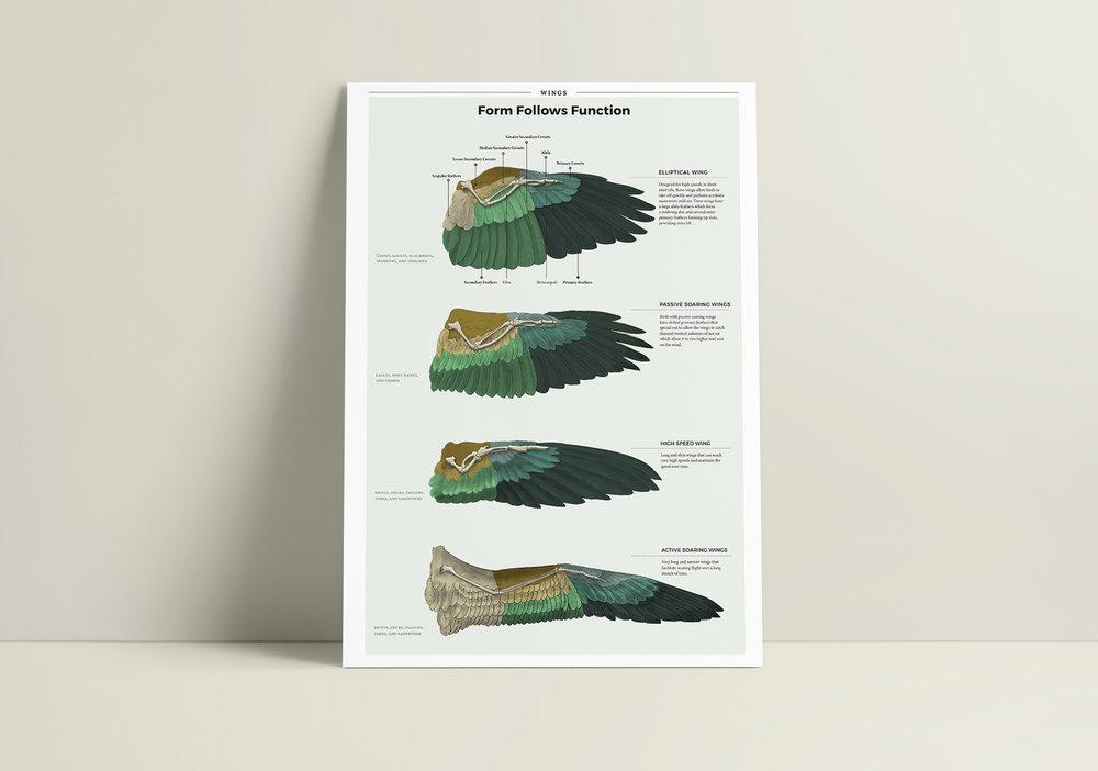 Bird Wing Morphology