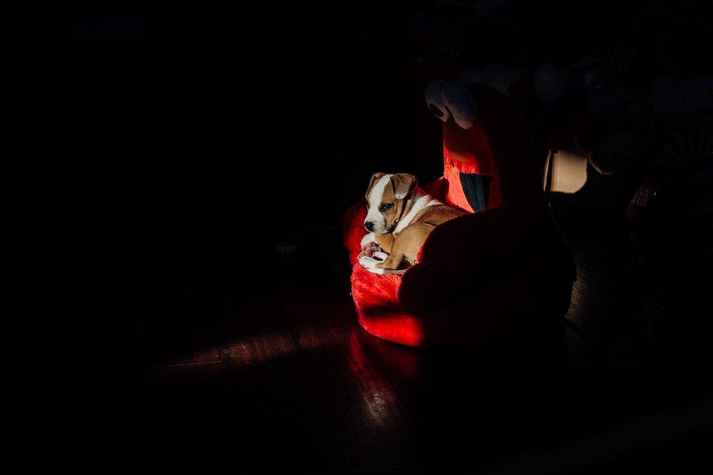 Lisa R. Howeler photographer