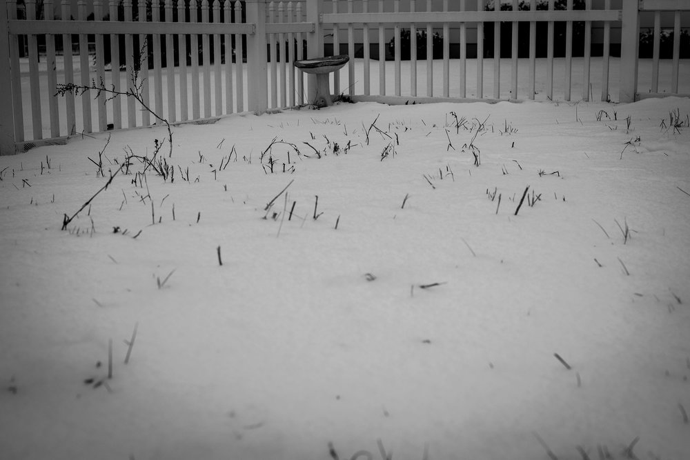 garden in winter Lisa R. Howeler