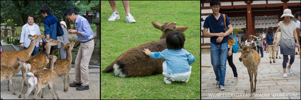 [Squarespace1500-077] Deer in Nara Collage.jpg