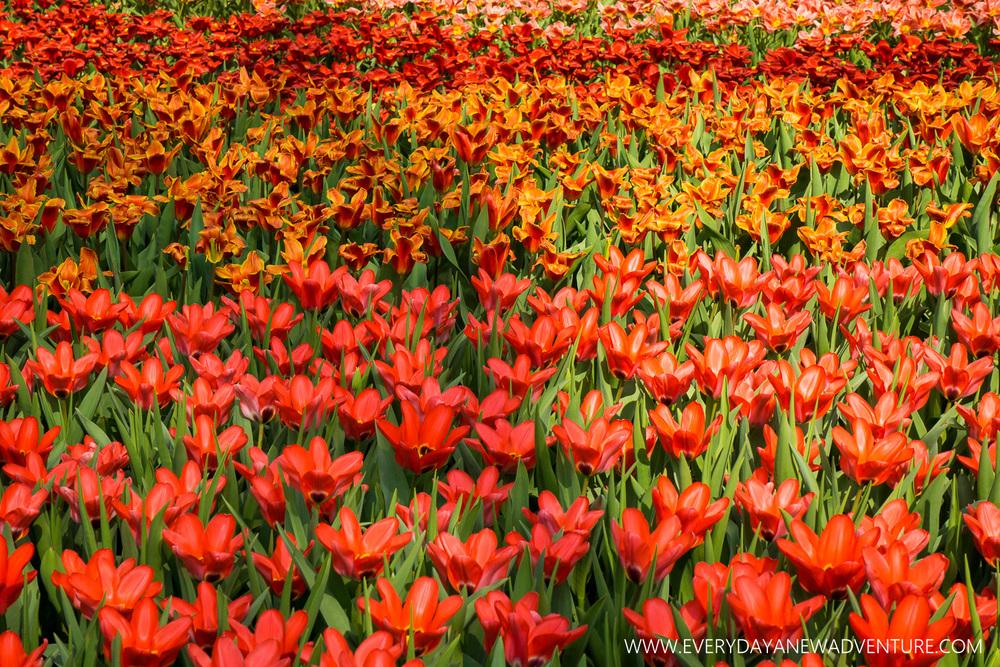 Springtime in Amsterdam!