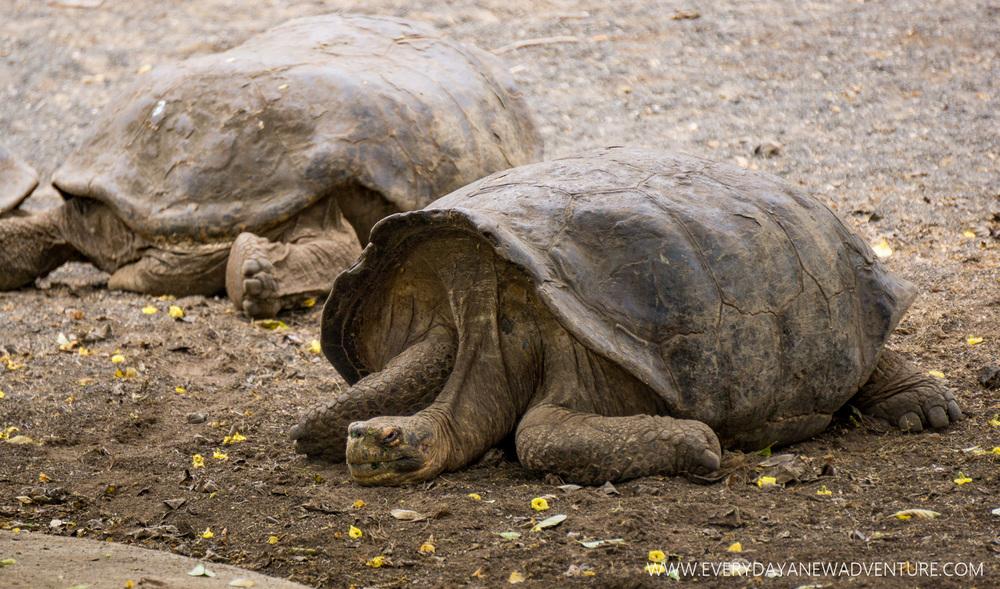 [SqSpGallery-005] Galapagos-123.jpg