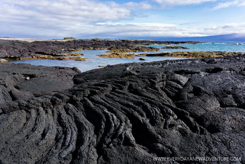 [SqSpGallery-011] Galapagos-354.jpg