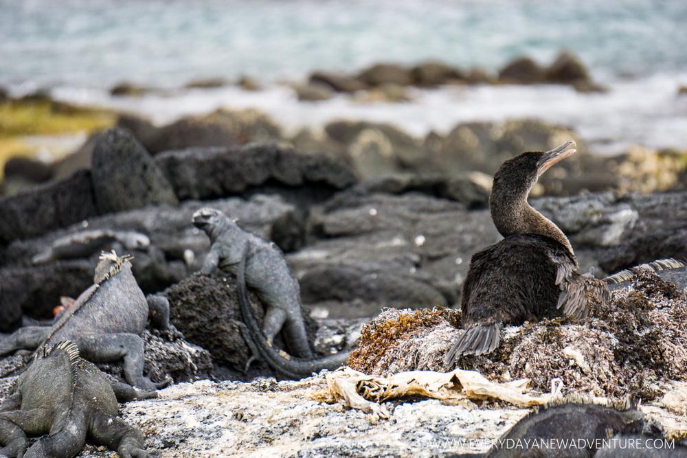 [SqSpGallery-016] Galapagos-519.jpg
