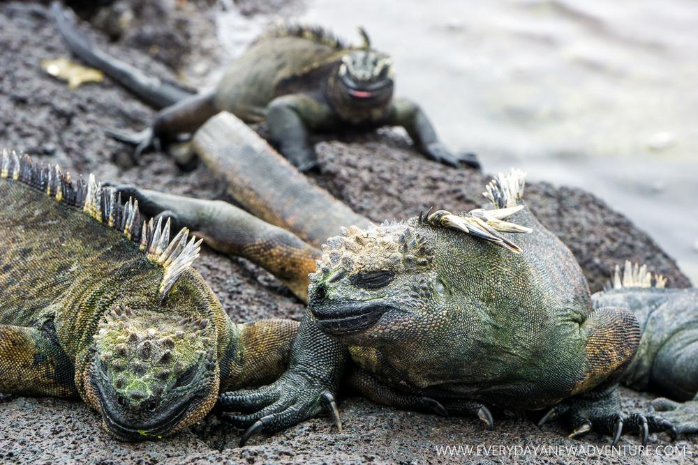 [SqSpGallery-019] Galapagos-592.jpg