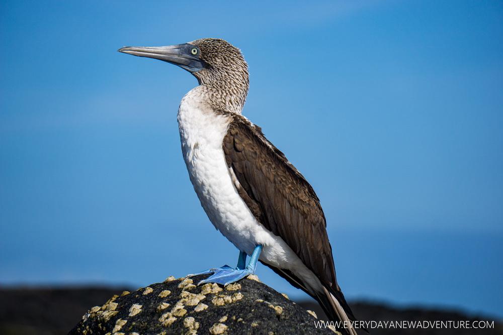 [SqSpGallery-031] Galapagos-1048.jpg
