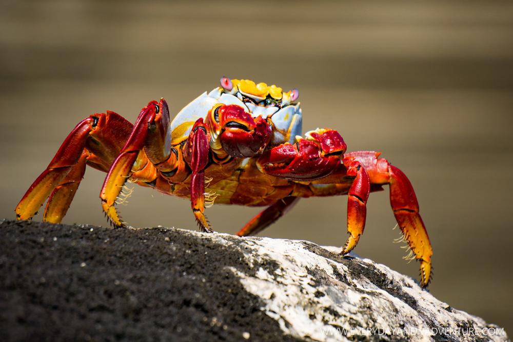 [SqSpGallery-034] Galapagos-1110.jpg