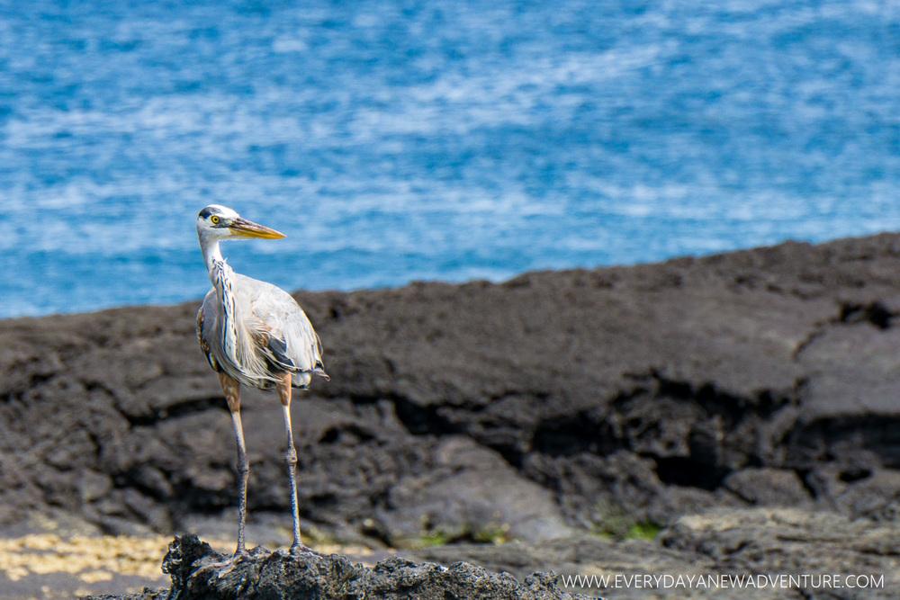 [SqSpGallery-042] Galapagos-1368.jpg