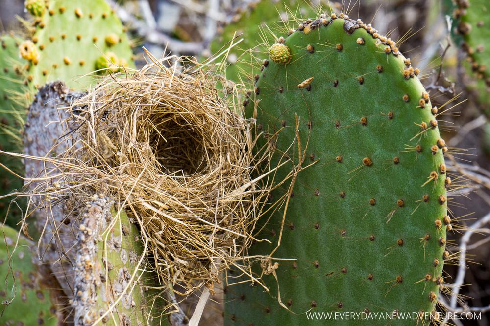 [SqSpGallery-051] Galapagos-1496.jpg