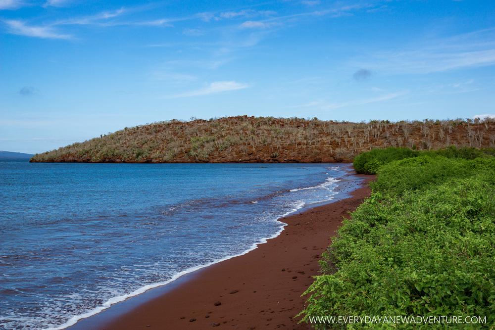 [SqSpGallery-052] Galapagos-1511.jpg