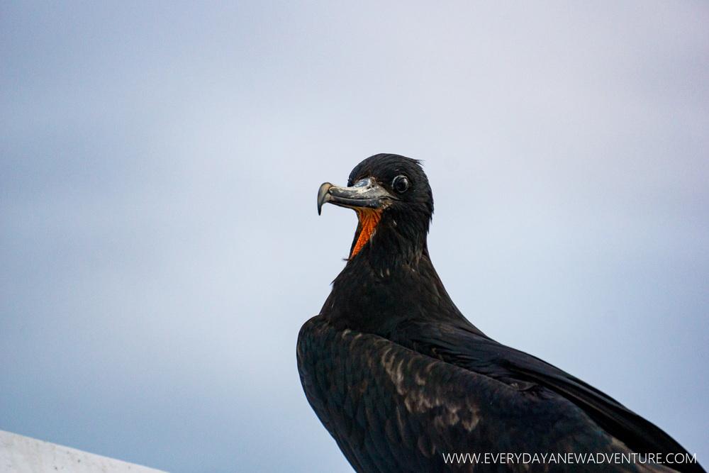 [SqSpGallery-054] Galapagos-1566.jpg