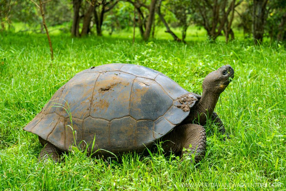 [SqSpGallery-060] Galapagos-1733.jpg