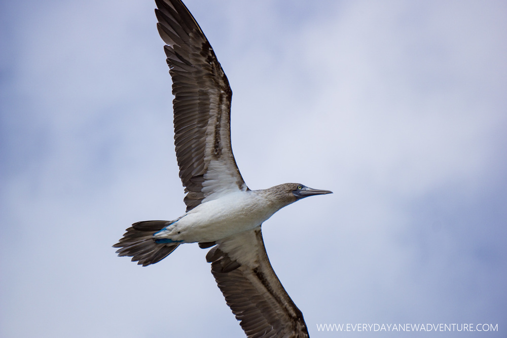 [SqSpGallery-074] Galapagos-2090.jpg