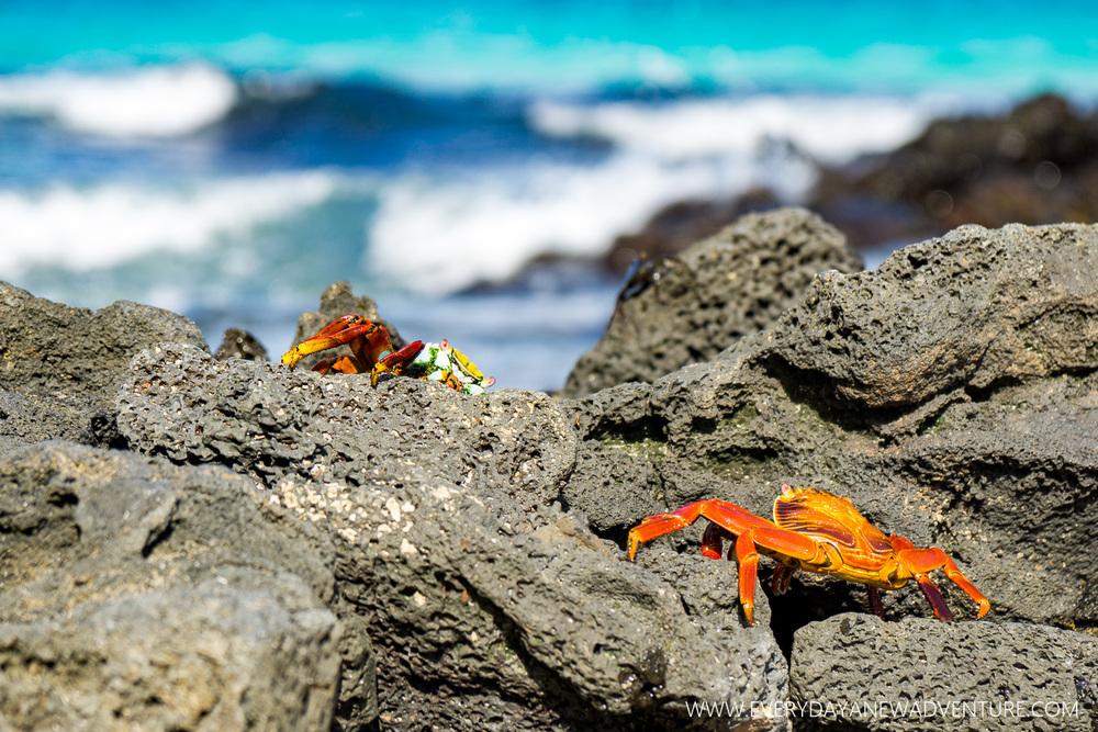 [SqSpGallery-076] Galapagos-2142.jpg