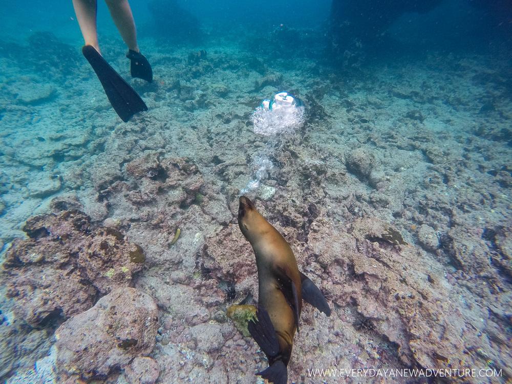 [SqSpGallery-080] Galapagos-2212.jpg