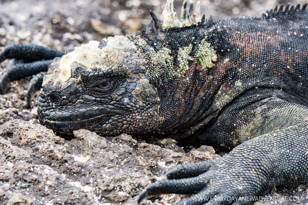 [SqSpGallery-083] Galapagos-2307.jpg