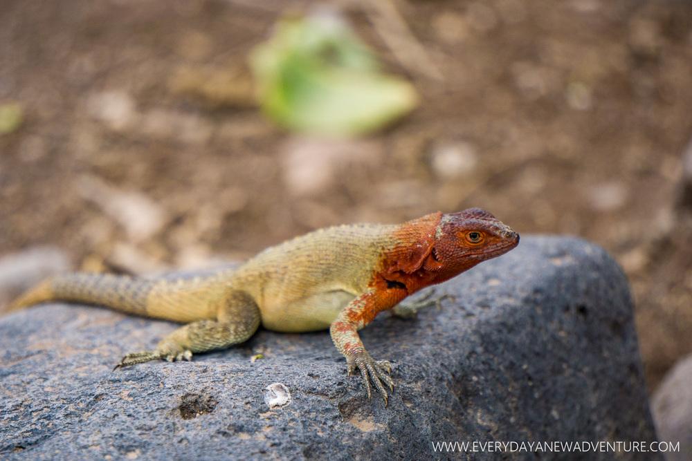[SqSpGallery-090] Galapagos-2481.jpg