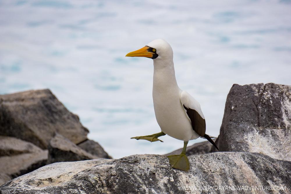 [SqSpGallery-092] Galapagos-2508.jpg