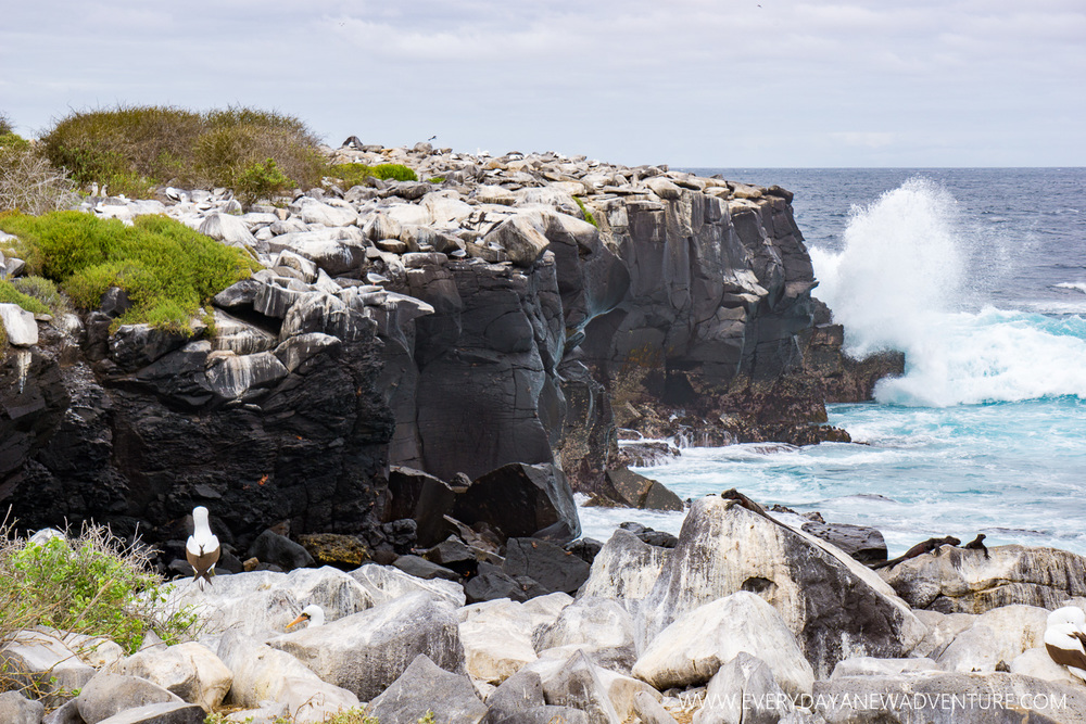 [SqSpGallery-091] Galapagos-2493.jpg