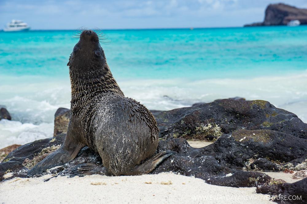 [SqSpGallery-112] Galapagos-3082.jpg