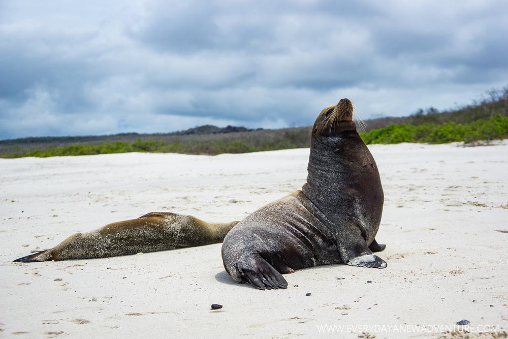 [SqSpGallery-115] Galapagos-3170.jpg