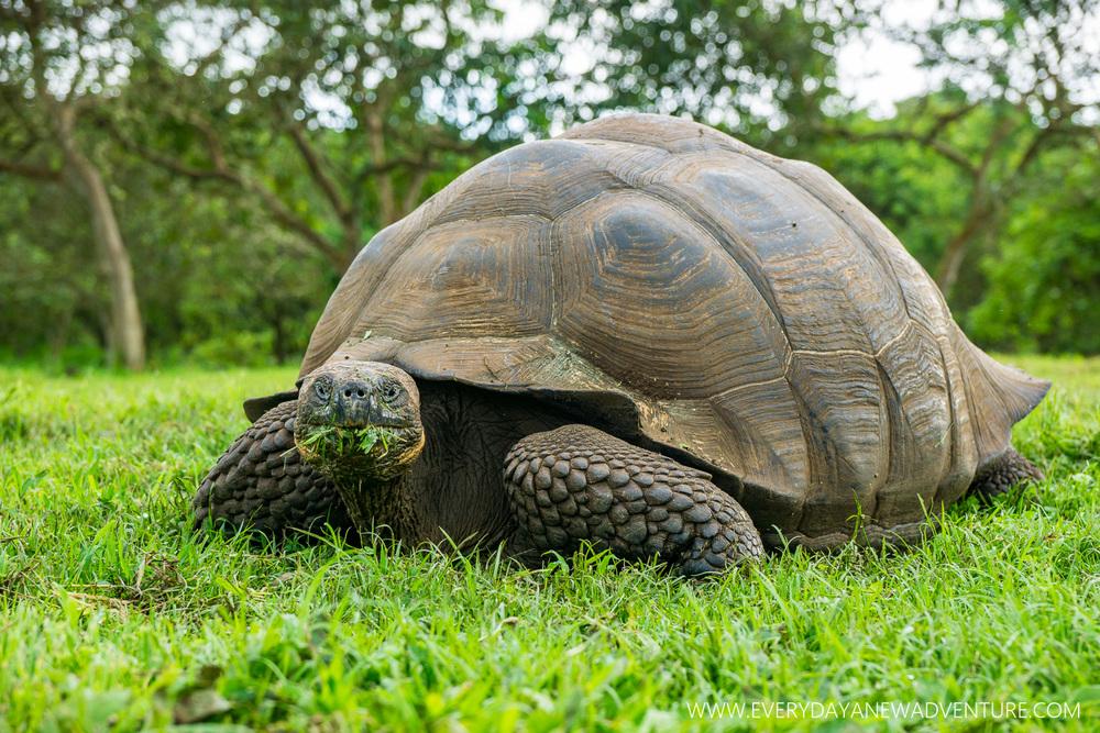 [SqSp Blog-017] Galapagos-1789.jpg