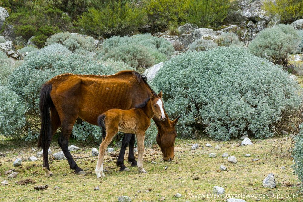 [SqSp Blog-050] Huaraz-08268.jpg