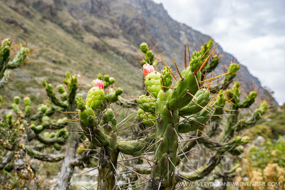 [SqSp Blog-055] Huaraz-08339.jpg