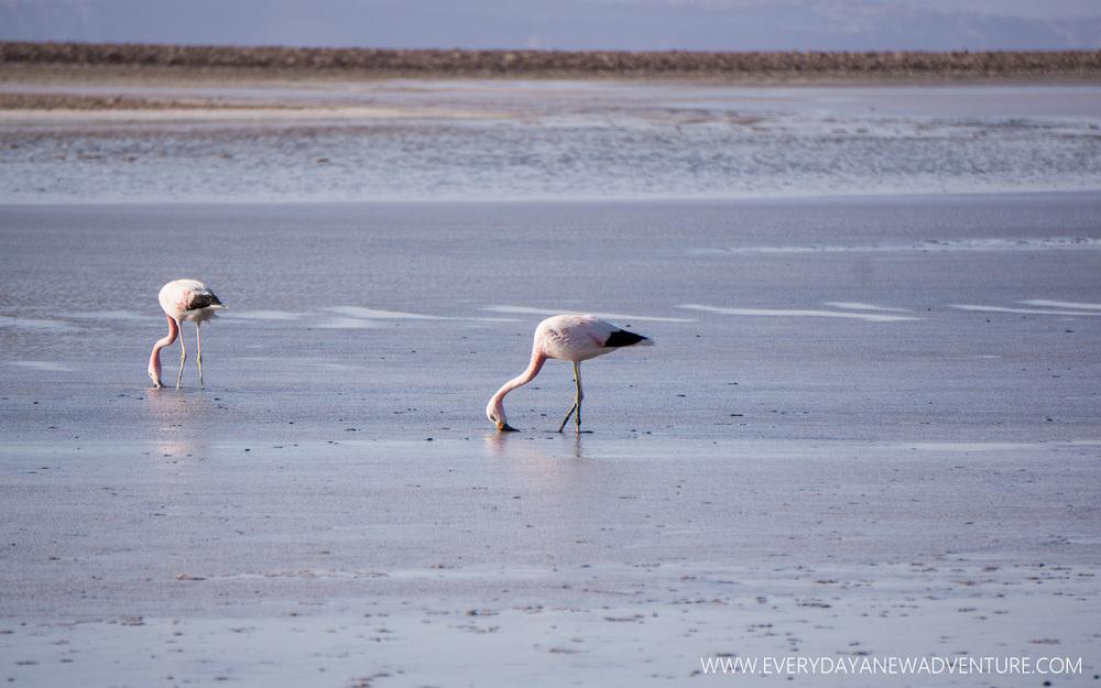 [SqSp Blog-024] San Pedro de Atacama-06490.jpg