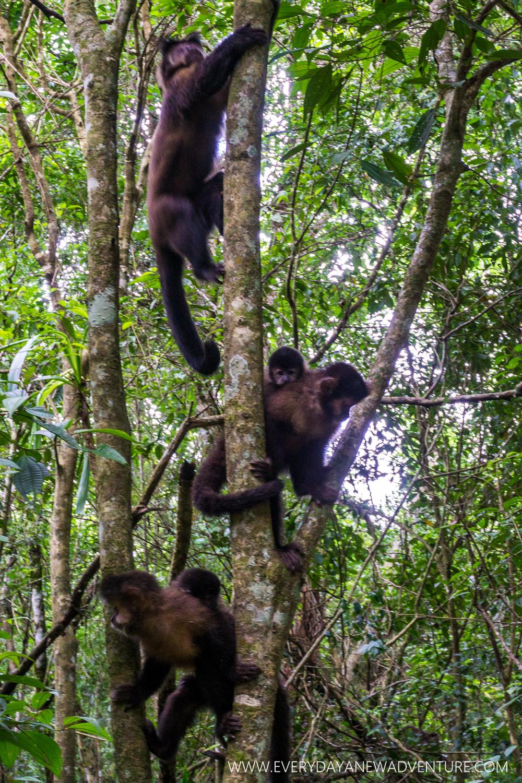 [SqSp Blog-059] Iguazu Falls-07507.jpg