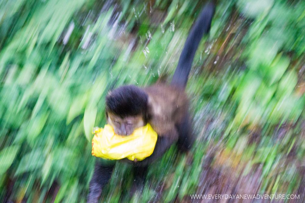 [SqSp Blog-060] Iguazu Falls-07504.jpg