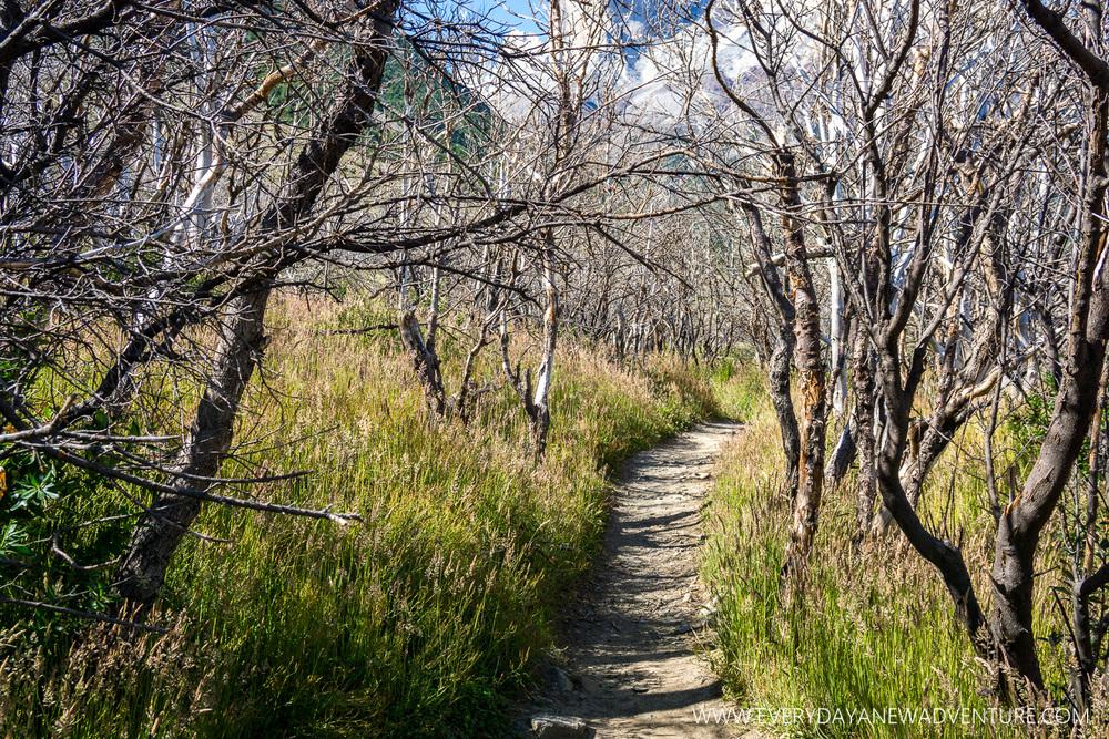 [SqSp Blog-034] Torres del Paine-04681.jpg
