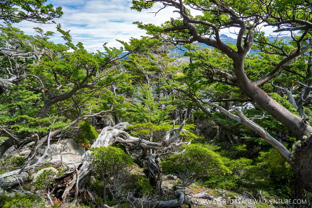 [SqSp Blog-055] Torres del Paine-05188.jpg