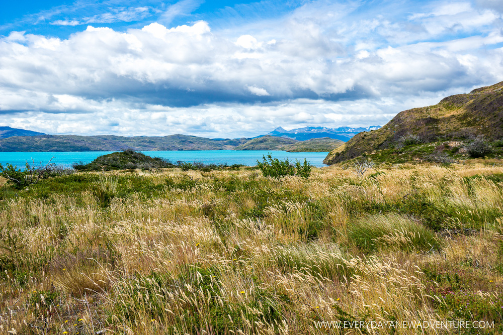 [SqSp Blog-061] Torres del Paine-05463.jpg