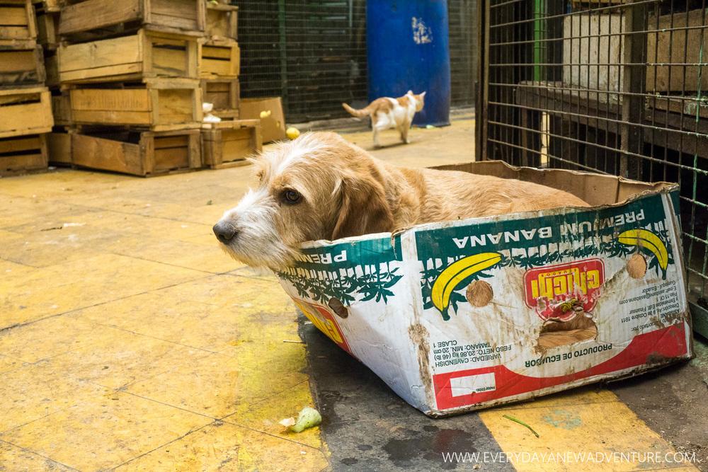 [SqSp Blog-012] Valparaiso-09207.jpg