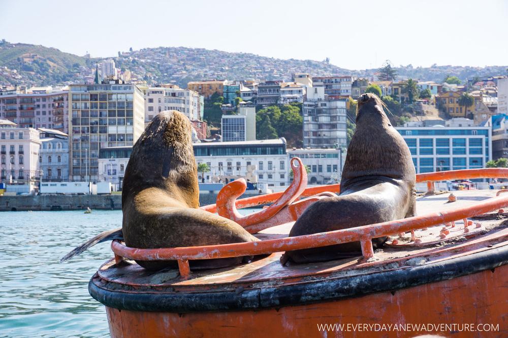 [SqSp Blog-026] Valparaiso-09272.jpg